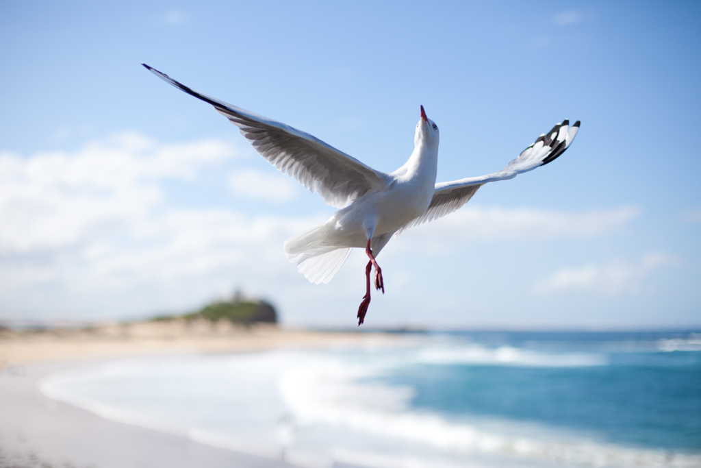 martı_aerial-ballet-seagull-photo-by-naomi-frost1
